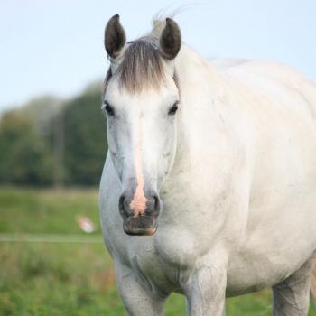 Zirgu stallis Ekvi